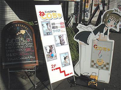 メイドカフェ「CCoちゃ」の上には猫カフェ「ねCoちゃ」