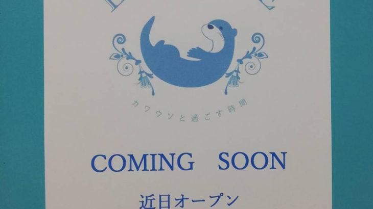 京都のカワウソカフェ「ルートル」が大阪・難波に2号店 3月オープンへ
